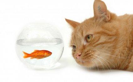 Аквариумные рыбки как мера