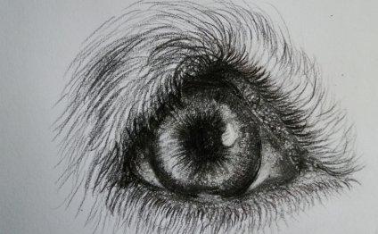 Глаз собаки поэтапно